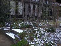 ブログ「へっぱく in裏庭」-2012.2 雪