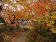 ブログ「へっぱく in裏庭」-2013 紅葉
