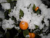 ブログ「へっぱく in裏庭」-雪3