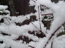 ブログ「へっぱく in裏庭」-雪2