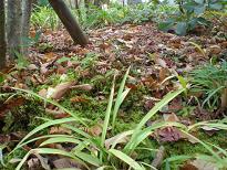 ブログ「へっぱく in裏庭」-冬の庭 落ち葉
