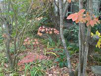 ブログ「へっぱく in裏庭」-冬の庭