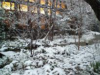 ブログ「へっぱく in裏庭」-雪景色②
