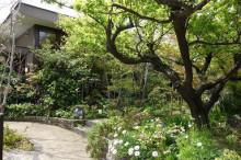 ブログ「へっぱく in裏庭」-niwa2013.04