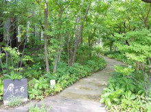ブログ「へっぱく in裏庭」-2013.07 お庭