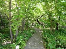2014.05.01 お庭
